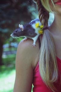 rat-457984_640